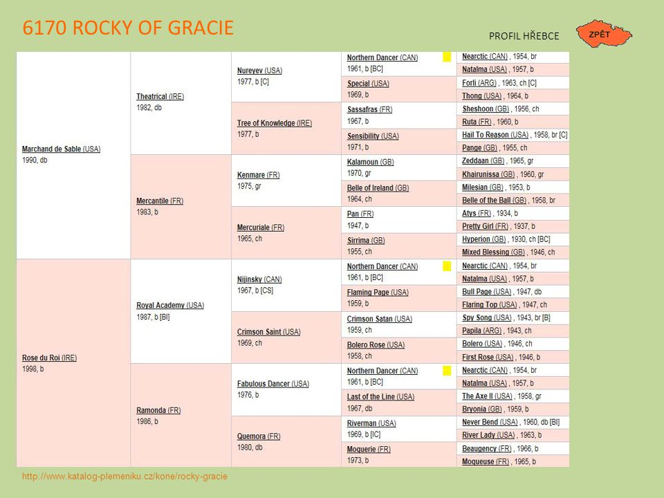 6170 ROCKY OF GRACIE PROFIL HŘEBCE