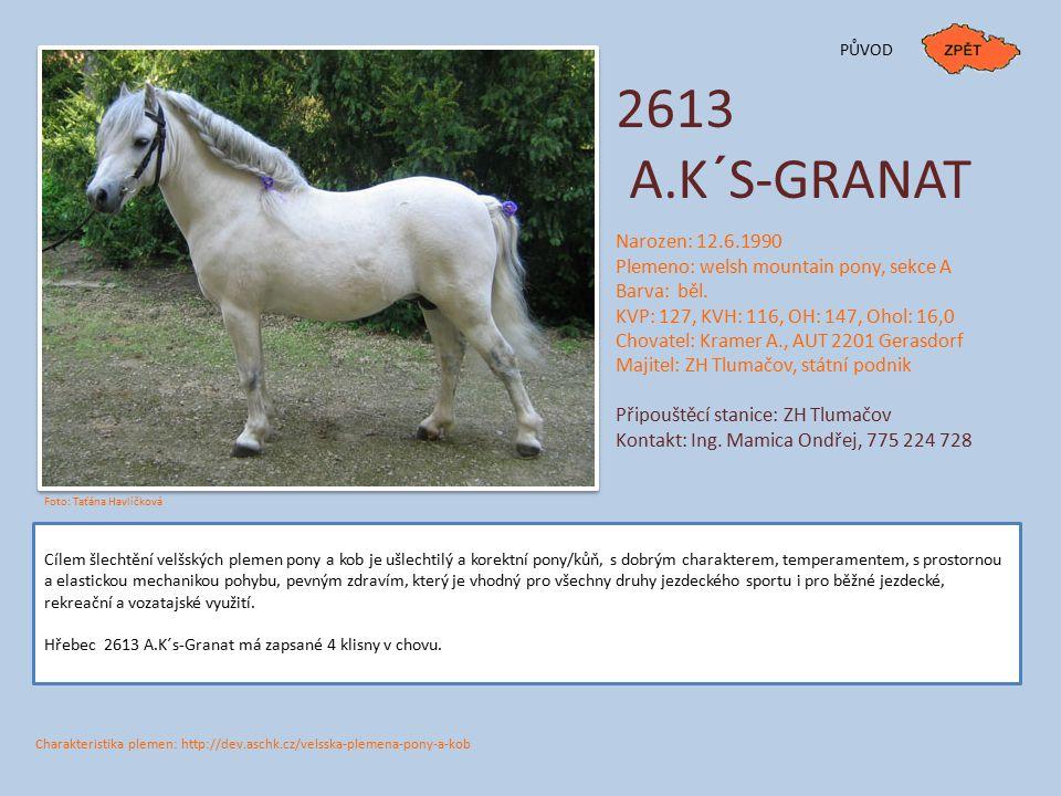 PŮVOD 2613. A.K´S-GRANAT. Narozen: 12.6.1990. Plemeno: welsh mountain pony, sekce A. Barva: běl.