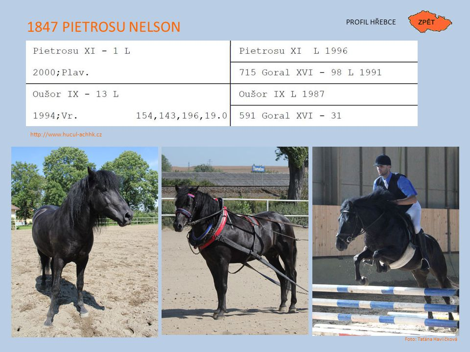 1847 PIETROSU NELSON PROFIL HŘEBCE http://www.hucul-achhk.cz