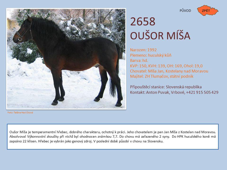 2658 OUŠOR MÍŠA Narozen: 1992 Plemeno: huculský kůň Barva: hd.