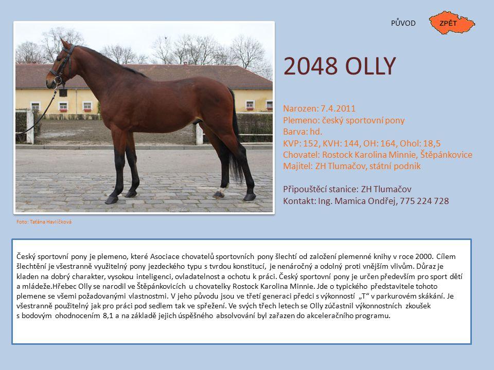 2048 OLLY Narozen: 7.4.2011 Plemeno: český sportovní pony Barva: hd.