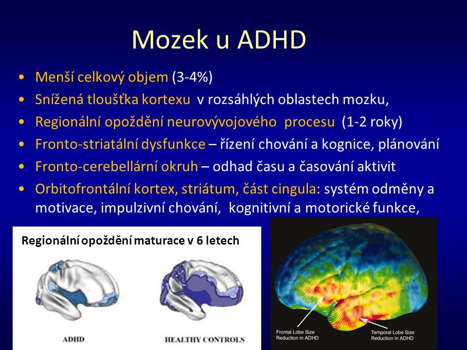Mozek u ADHD Menší celkový objem (3-4%)