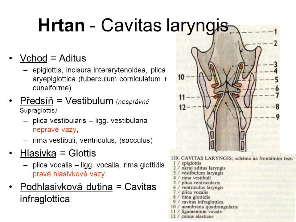 Hrtan - Cavitas laryngis