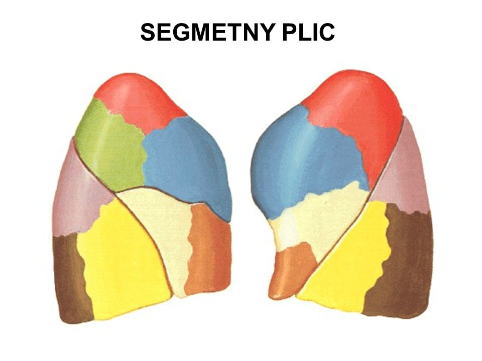 SEGMETNY PLIC A P -- L M (B)S (B)M (B)A (B)L (B)P