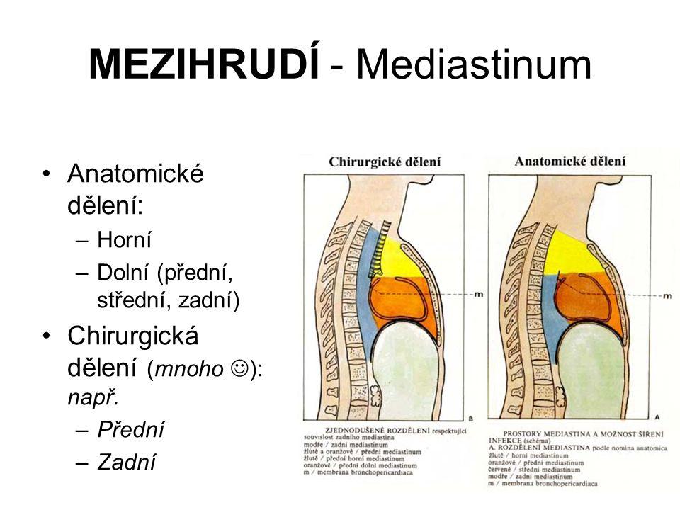MEZIHRUDÍ - Mediastinum