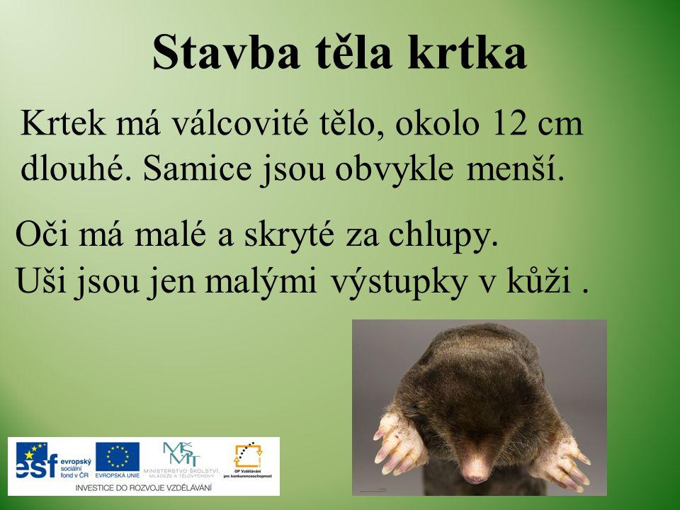 Stavba těla krtka Krtek má válcovité tělo, okolo 12 cm dlouhé. Samice jsou obvykle menší. Oči má malé a skryté za chlupy.
