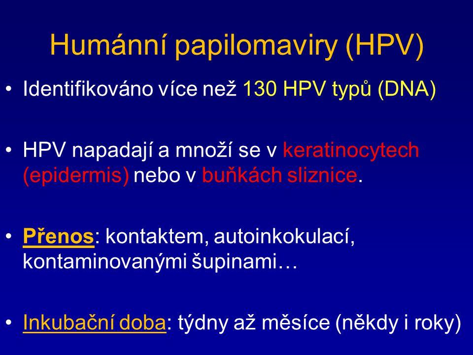 Humánní papilomaviry (HPV)