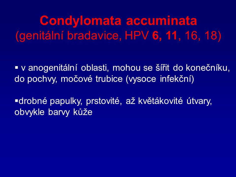 Condylomata accuminata (genitální bradavice, HPV 6, 11, 16, 18)