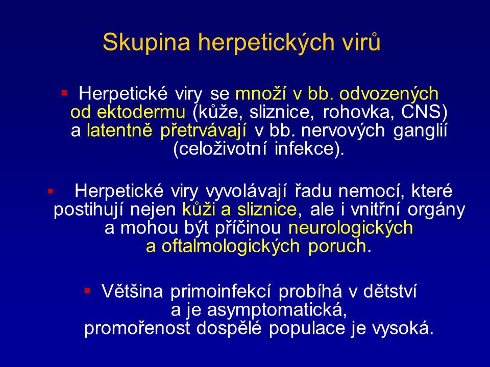 Skupina herpetických virů