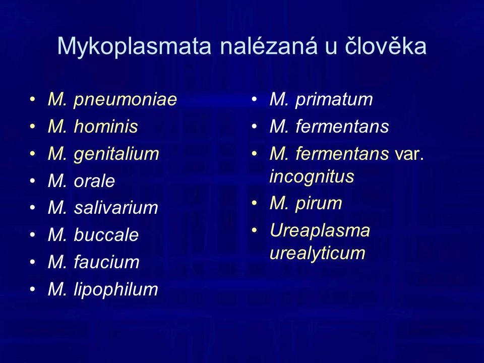 Mykoplasmata nalézaná u člověka