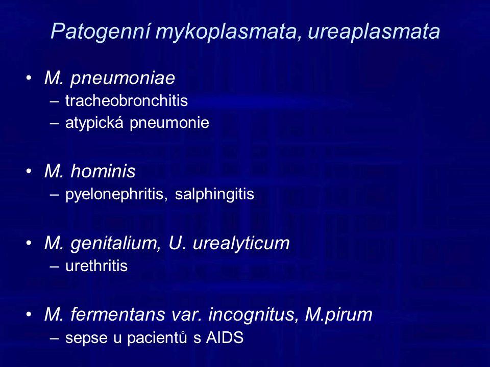 Patogenní mykoplasmata, ureaplasmata