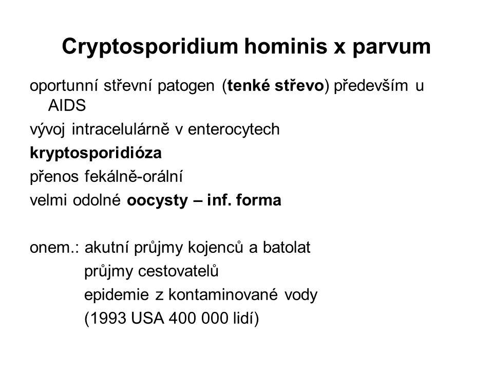 Cryptosporidium hominis x parvum