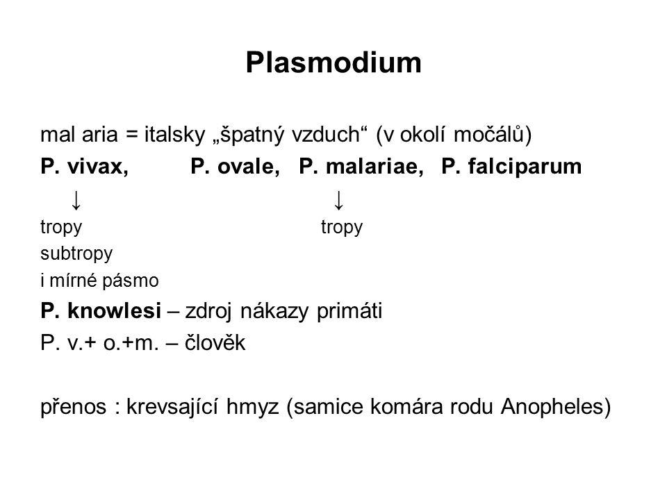 """Plasmodium mal aria = italsky """"špatný vzduch (v okolí močálů)"""