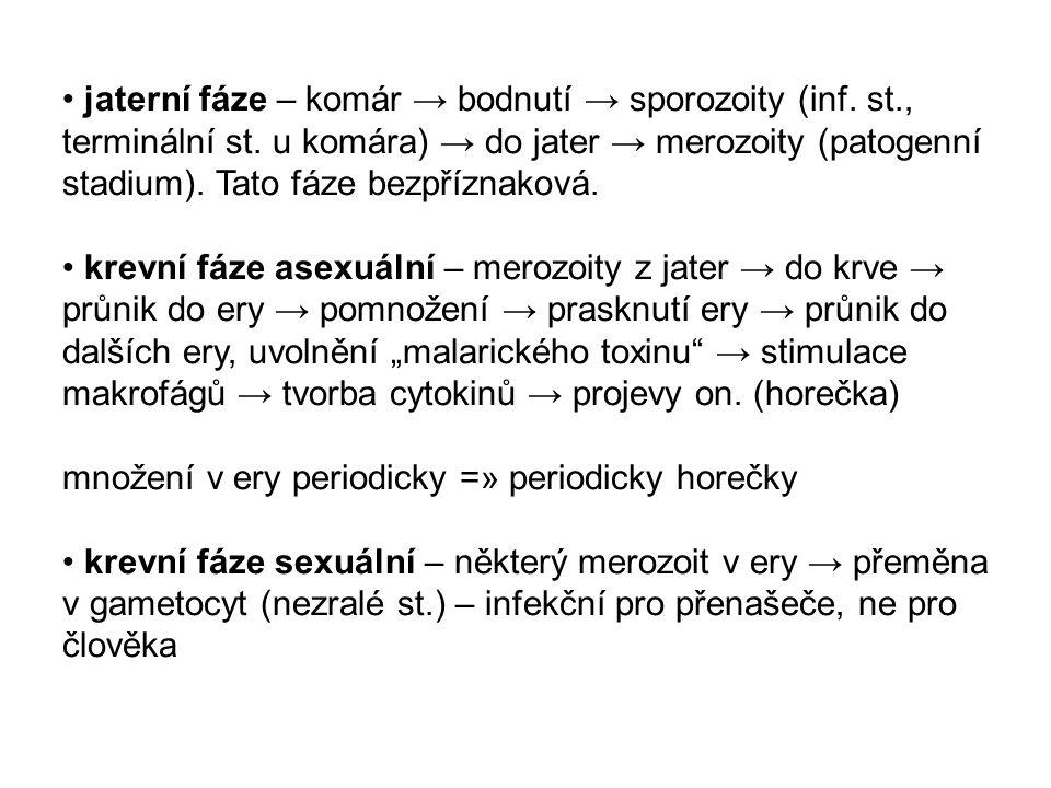 jaterní fáze – komár → bodnutí → sporozoity (inf. st. , terminální st