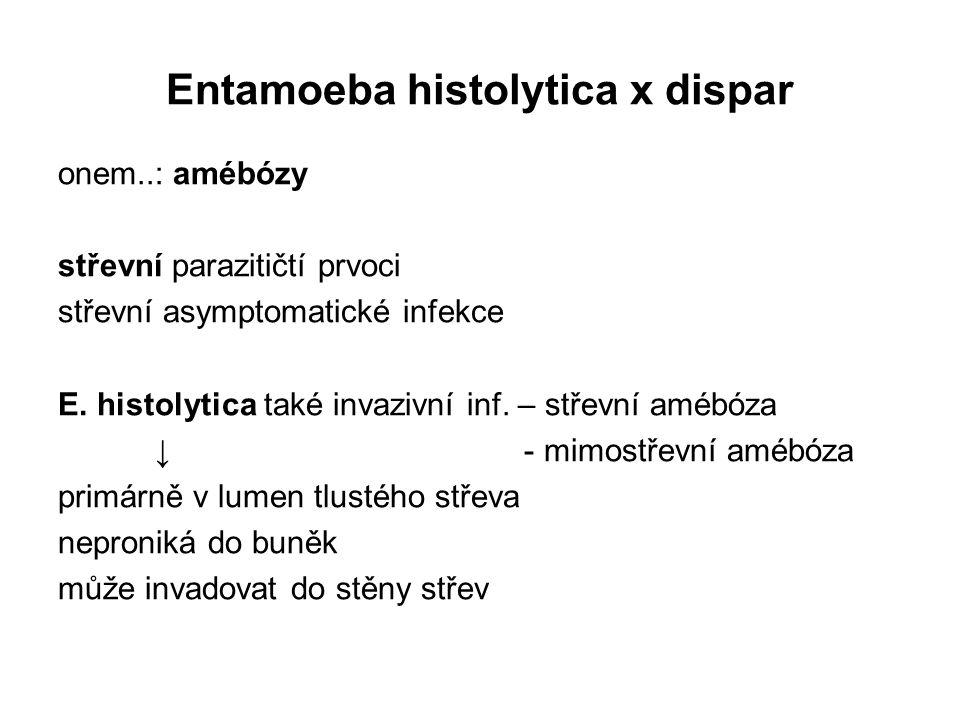 Entamoeba histolytica x dispar