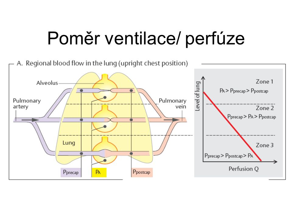 Poměr ventilace/ perfúze