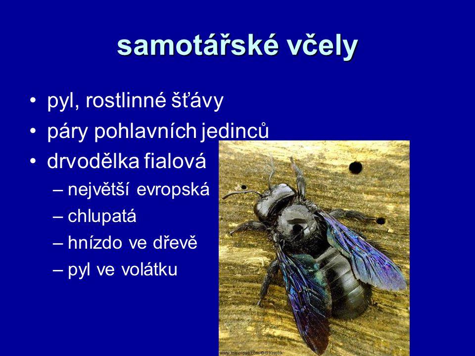 samotářské včely pyl, rostlinné šťávy páry pohlavních jedinců