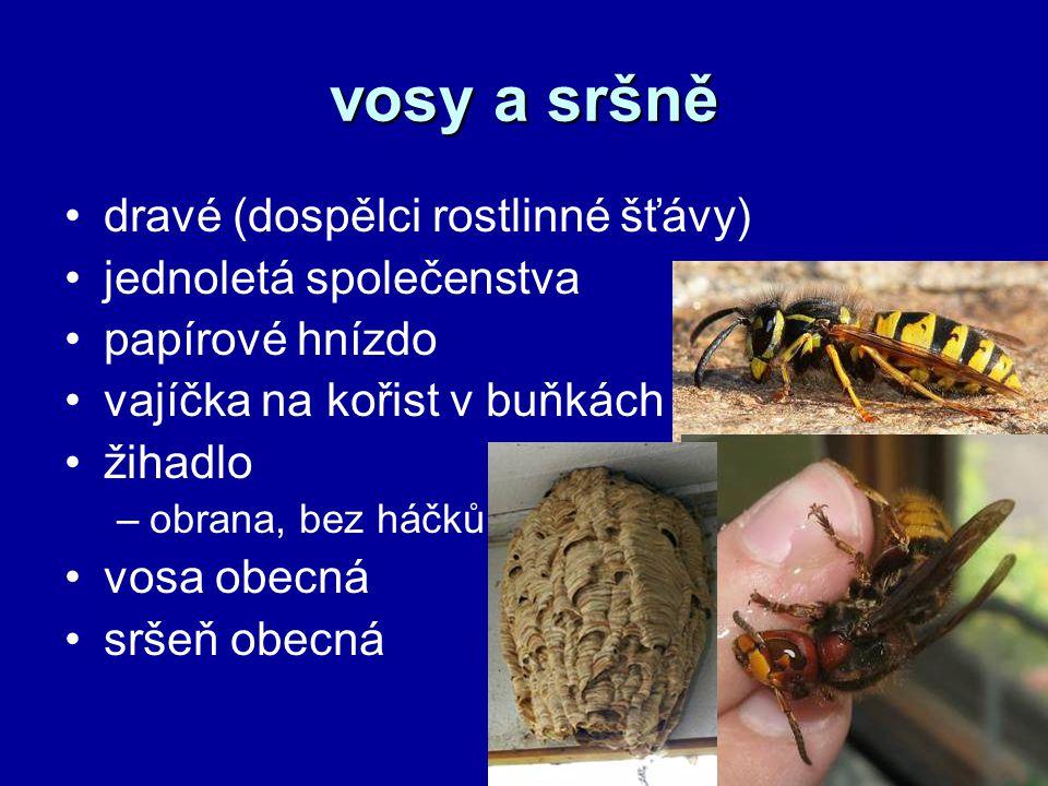 vosy a sršně dravé (dospělci rostlinné šťávy) jednoletá společenstva