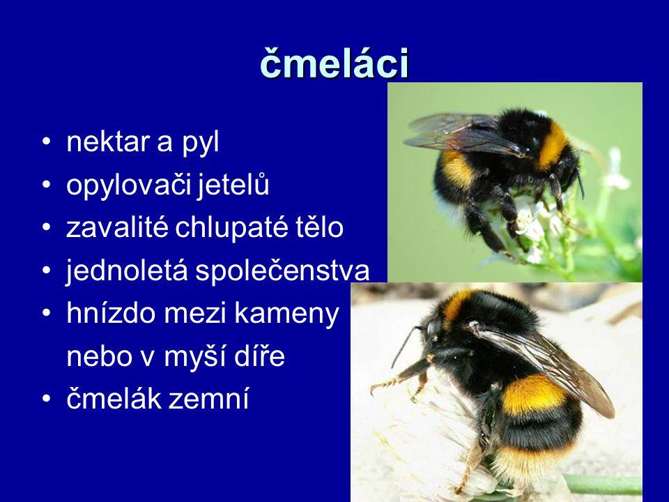 čmeláci nektar a pyl opylovači jetelů zavalité chlupaté tělo