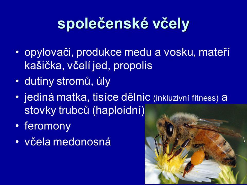 společenské včely opylovači, produkce medu a vosku, mateří kašička, včelí jed, propolis. dutiny stromů, úly.