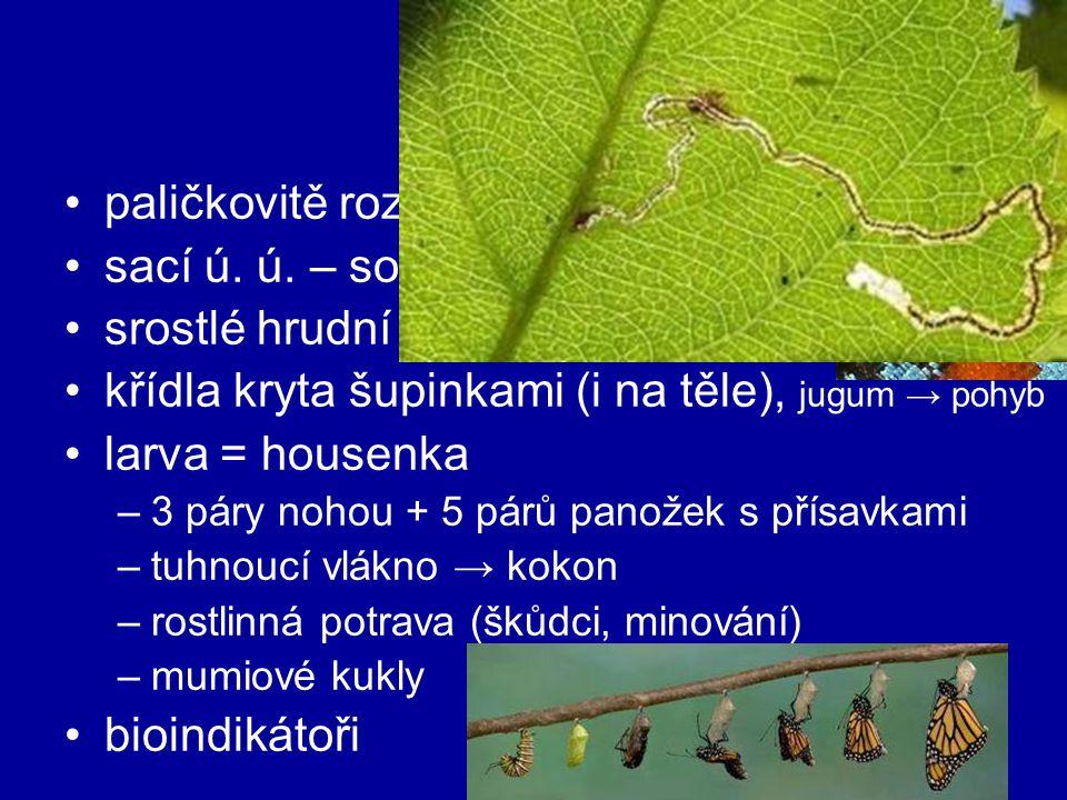motýli paličkovitě rozšířená tykadla sací ú. ú. – sosák – nektar