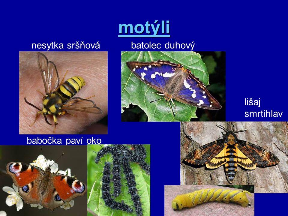 motýli nesytka sršňová batolec duhový lišaj smrtihlav babočka paví oko