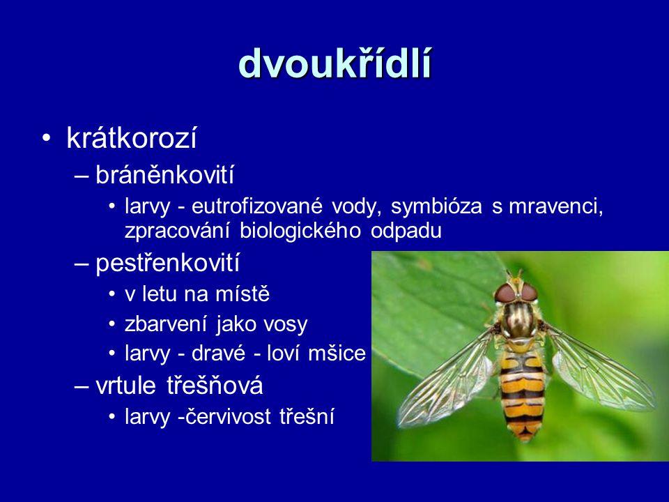 dvoukřídlí krátkorozí bráněnkovití pestřenkovití vrtule třešňová
