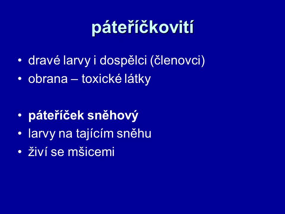 páteříčkovití dravé larvy i dospělci (členovci) obrana – toxické látky