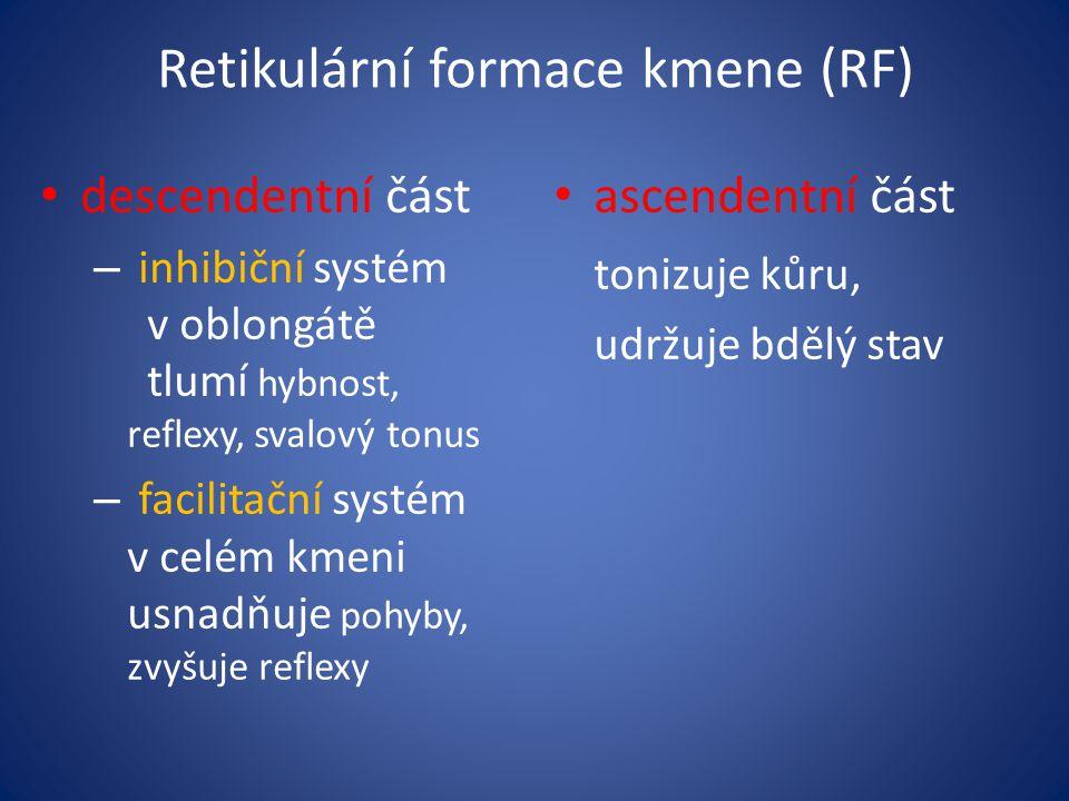 Retikulární formace kmene (RF)