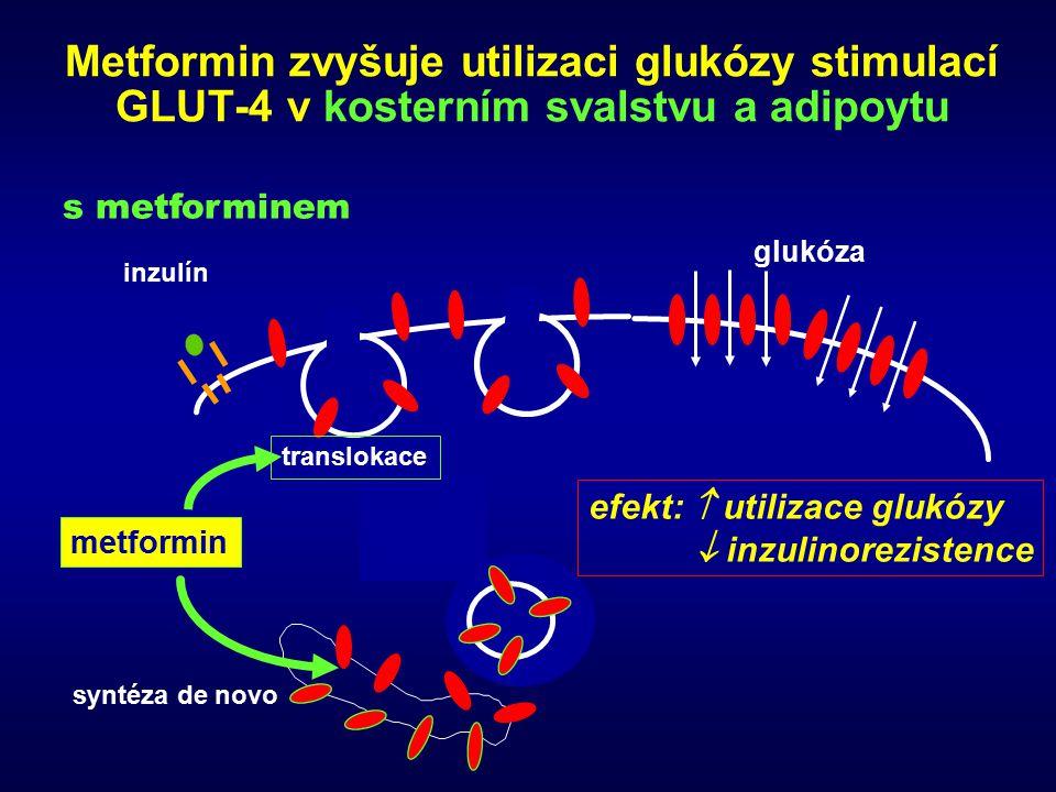 Metformin zvyšuje utilizaci glukózy stimulací GLUT-4 v kosterním svalstvu a adipoytu