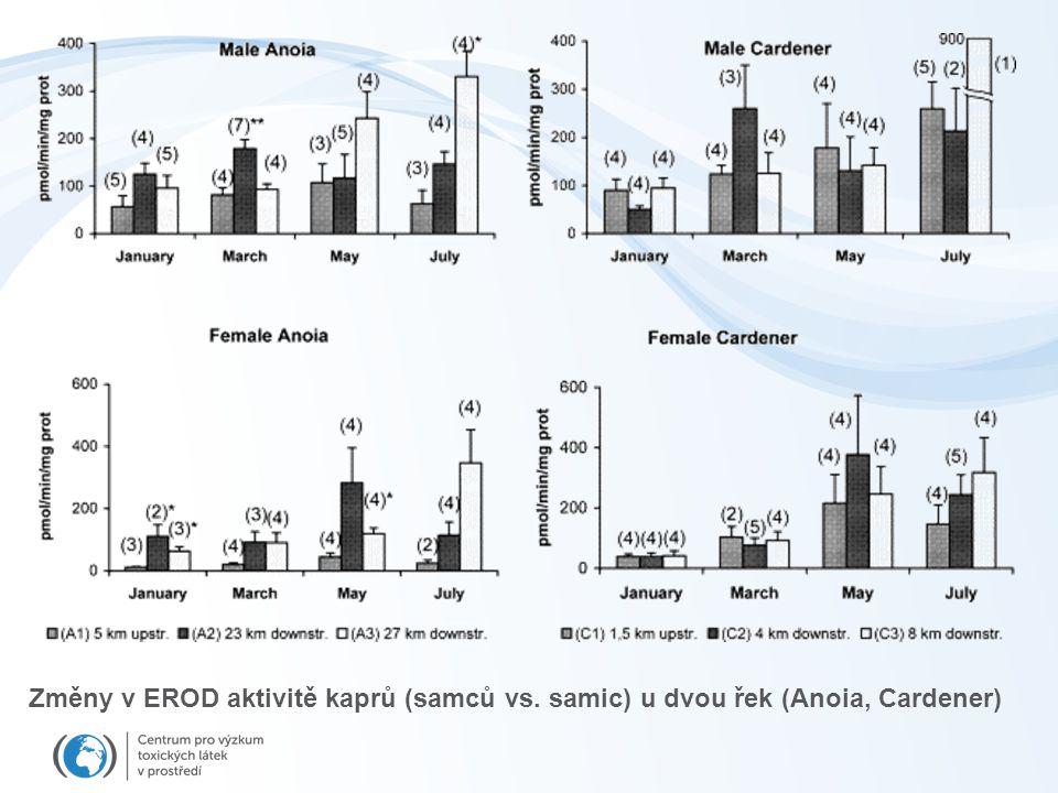 Změny v EROD aktivitě kaprů (samců vs