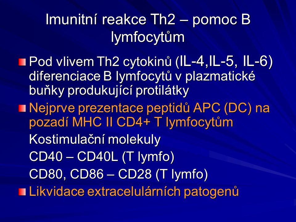 Imunitní reakce Th2 – pomoc B lymfocytům