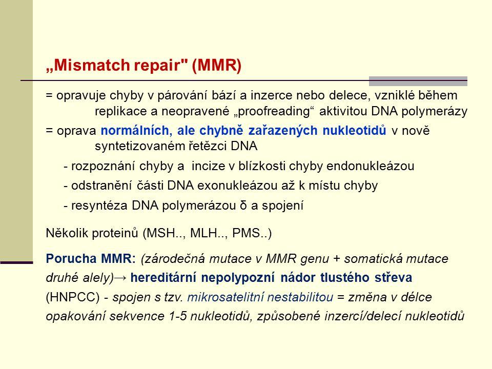 """Mismatch repair (MMR)"