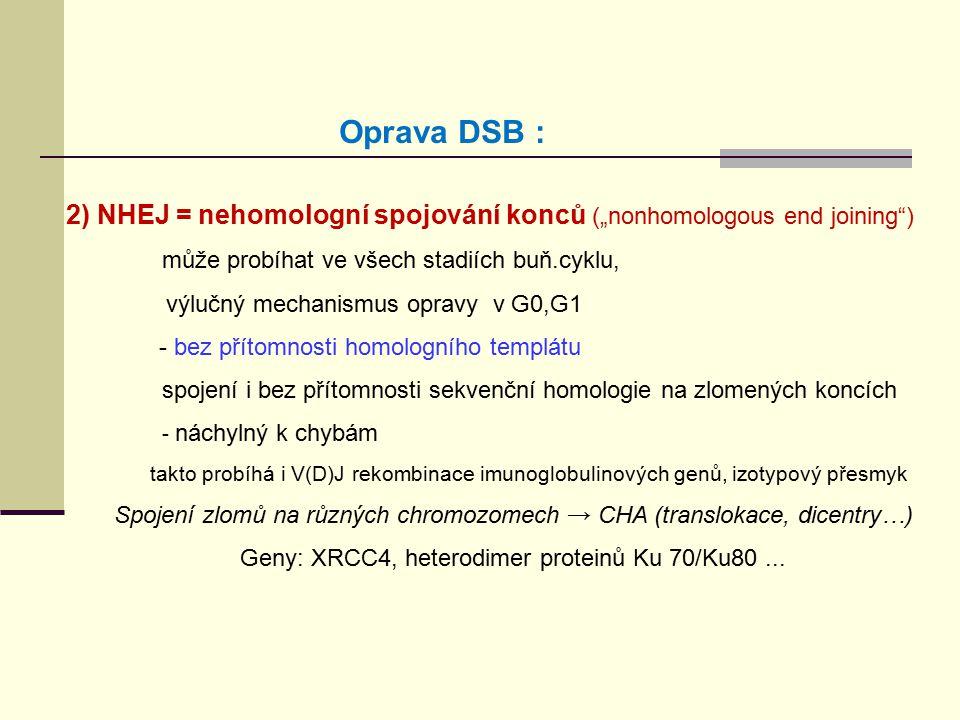 """Oprava DSB : 2) NHEJ = nehomologní spojování konců (""""nonhomologous end joining ) může probíhat ve všech stadiích buň.cyklu,"""