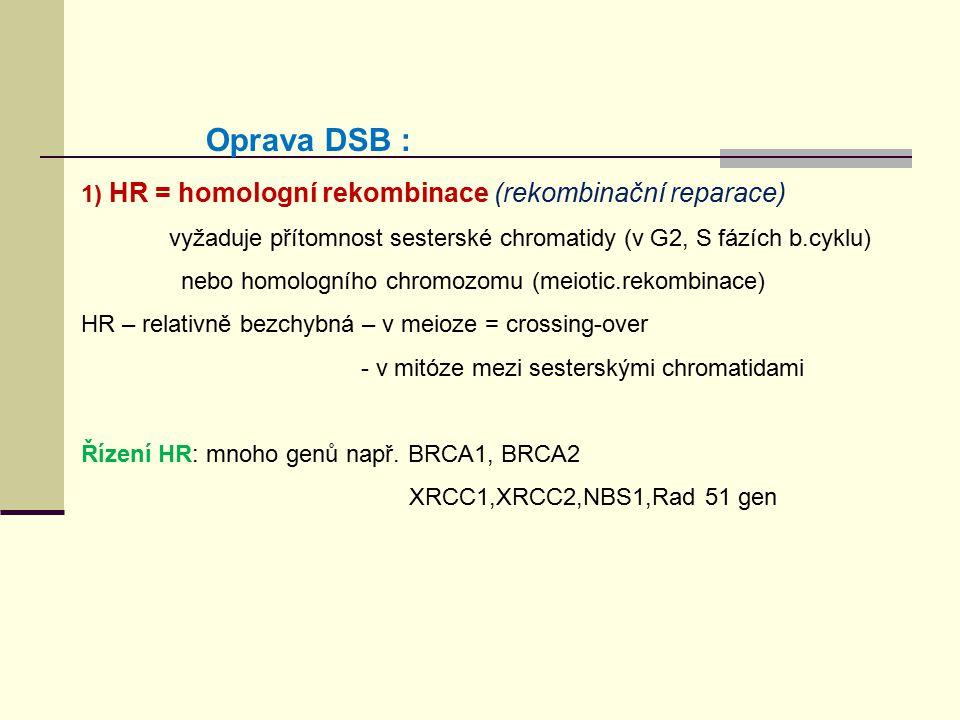 Oprava DSB : 1) HR = homologní rekombinace (rekombinační reparace)