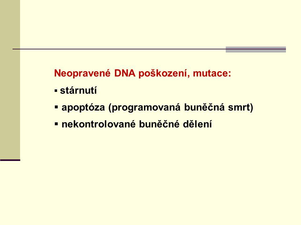 Neopravené DNA poškození, mutace: apoptóza (programovaná buněčná smrt)