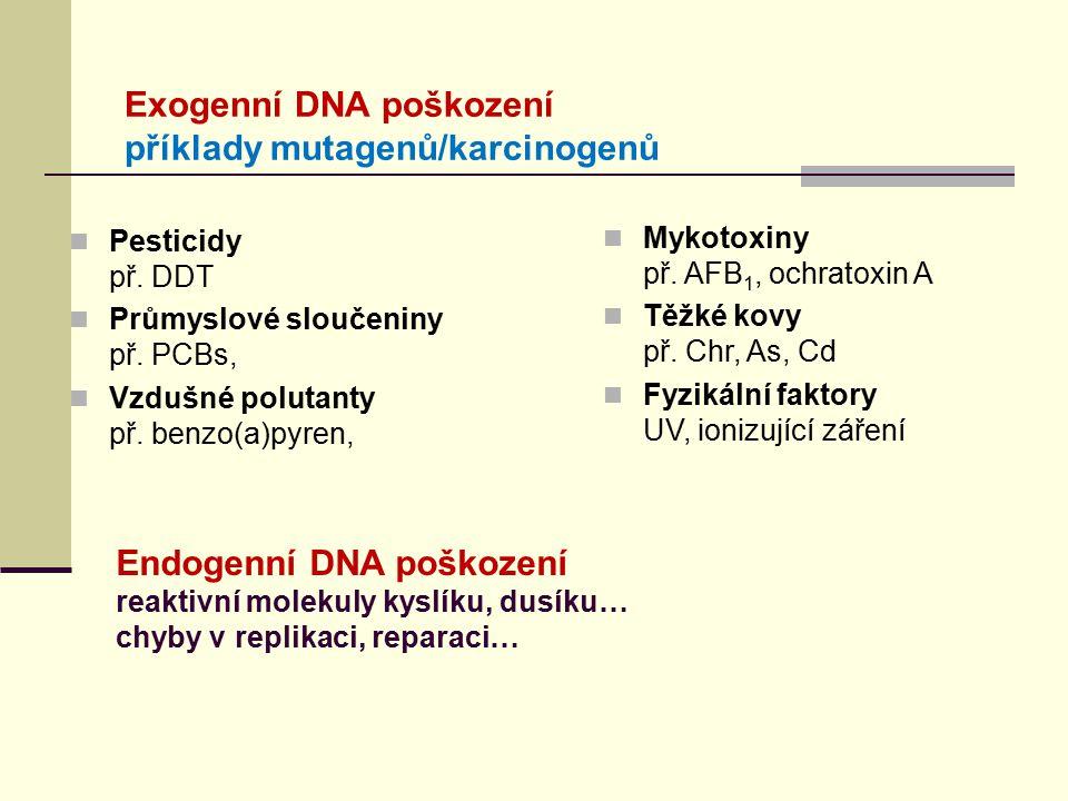 Exogenní DNA poškození příklady mutagenů/karcinogenů