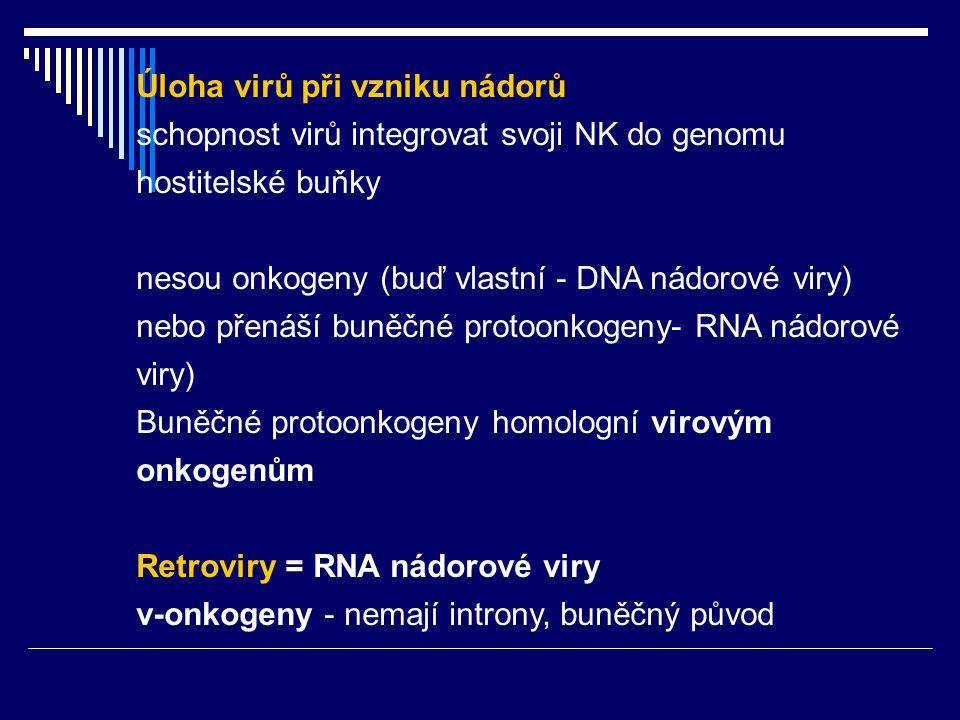 Úloha virů při vzniku nádorů