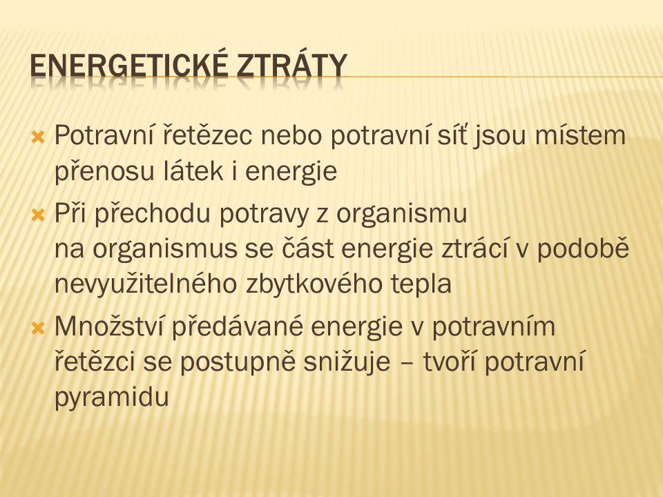 Energetické ztráty Potravní řetězec nebo potravní síť jsou místem přenosu látek i energie.