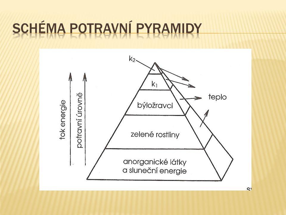 Schéma potravní pyramidy