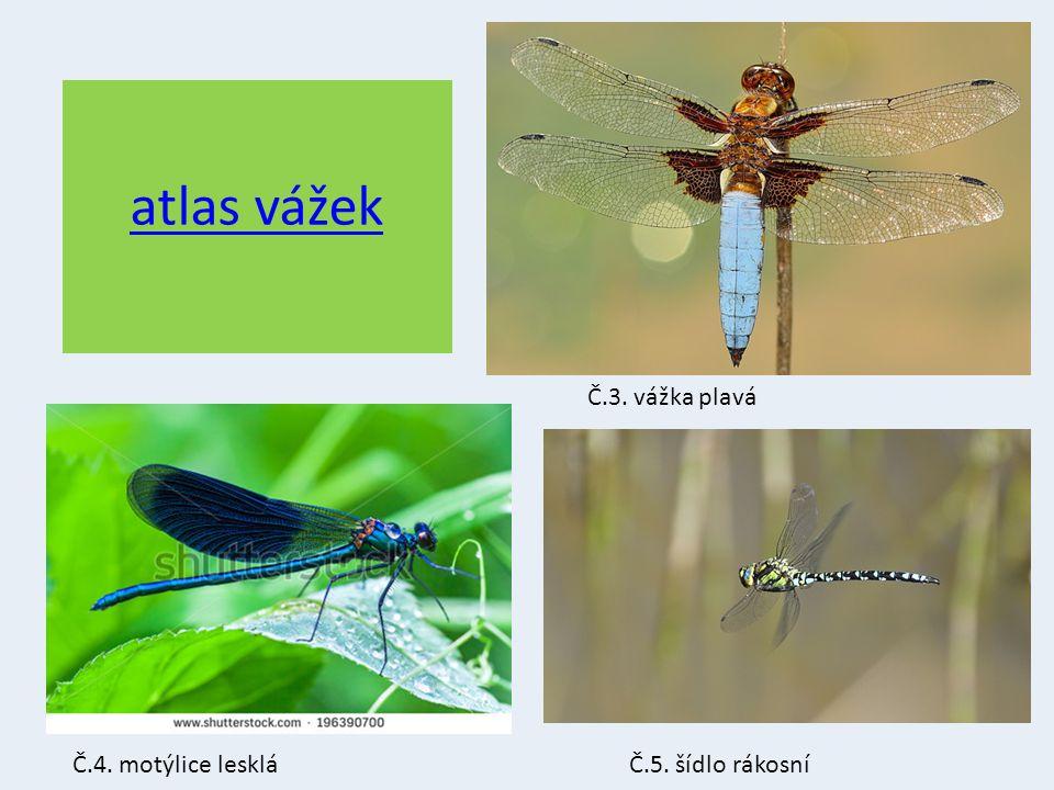 atlas vážek Č.3. vážka plavá Č.4. motýlice lesklá Č.5. šídlo rákosní