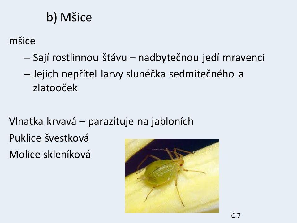b) Mšice mšice Sají rostlinnou šťávu – nadbytečnou jedí mravenci