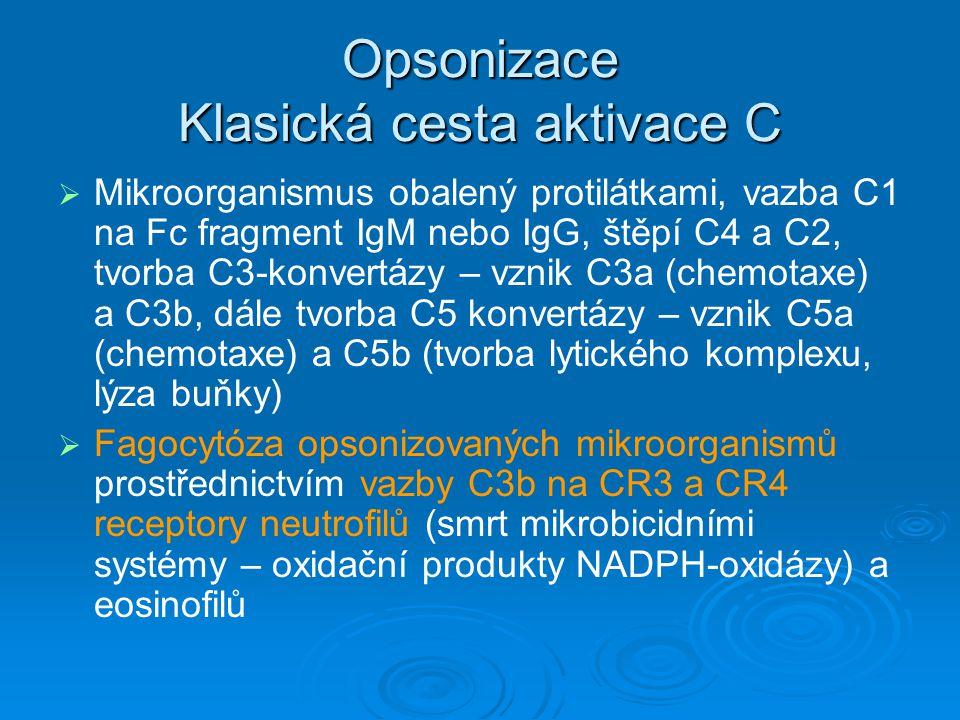 Opsonizace Klasická cesta aktivace C