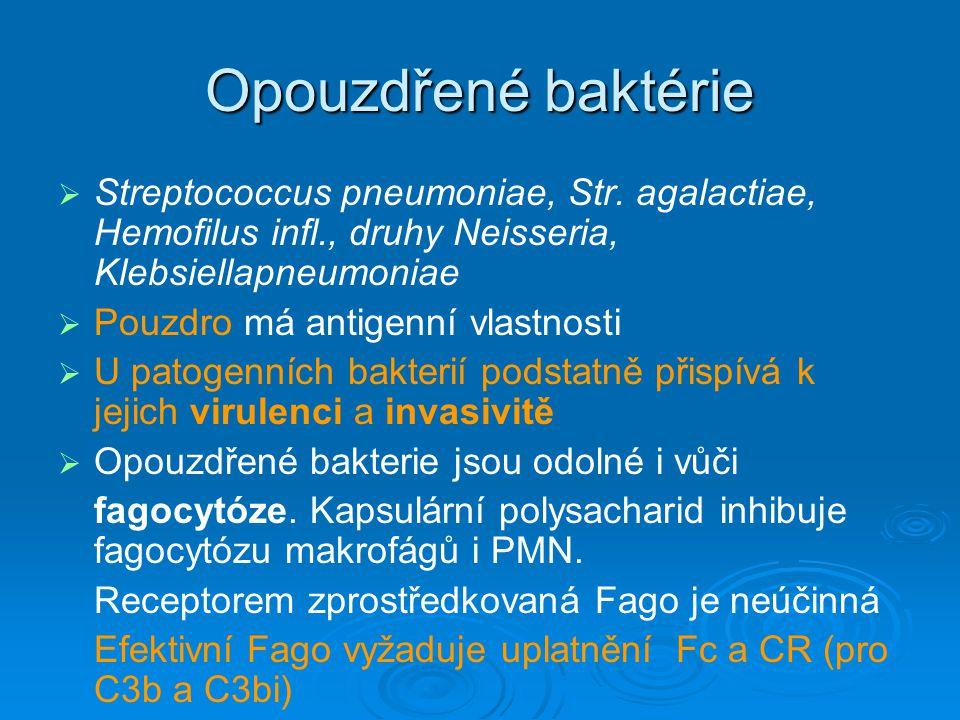 Opouzdřené baktérie Streptococcus pneumoniae, Str. agalactiae, Hemofilus infl., druhy Neisseria, Klebsiellapneumoniae.