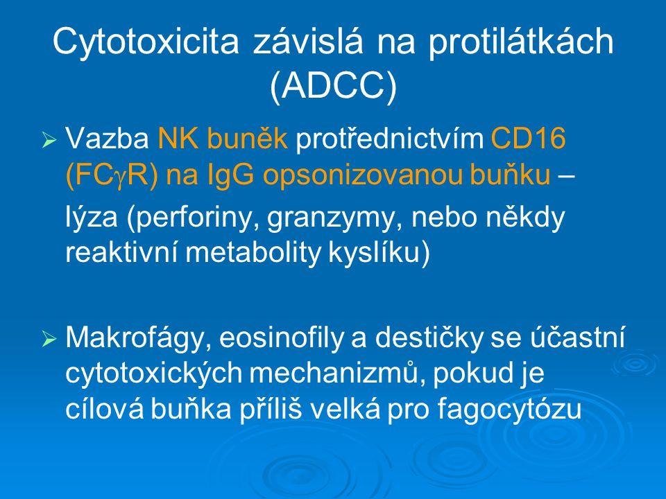 Cytotoxicita závislá na protilátkách (ADCC)