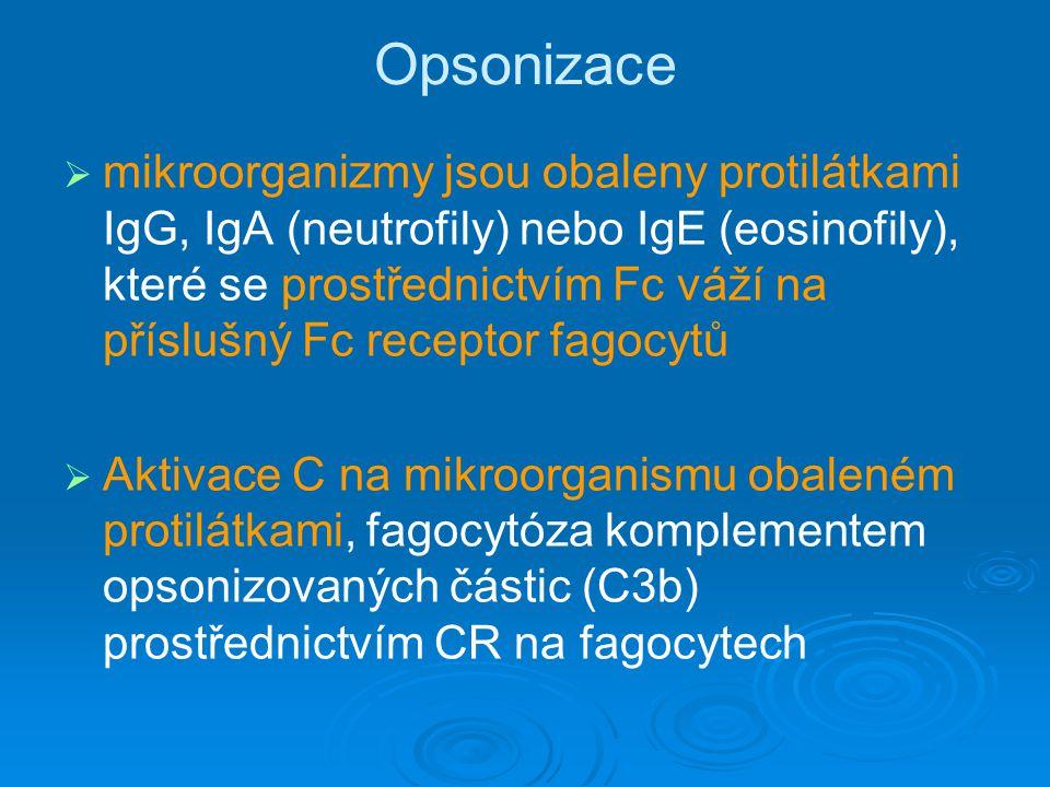 Opsonizace