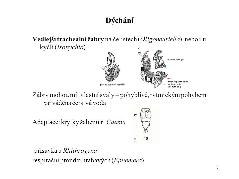 Dýchání Vedlejší tracheální žábry na čelistech (Oligoneuriella), nebo i u kyčlí (Isonychia)