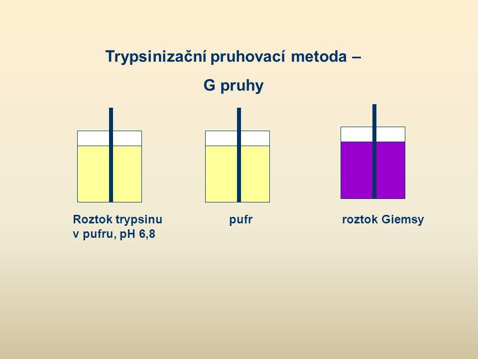 Trypsinizační pruhovací metoda –