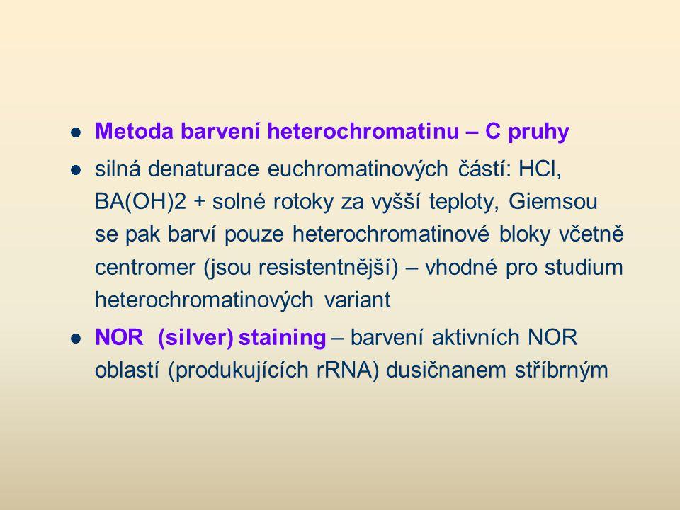 Metoda barvení heterochromatinu – C pruhy