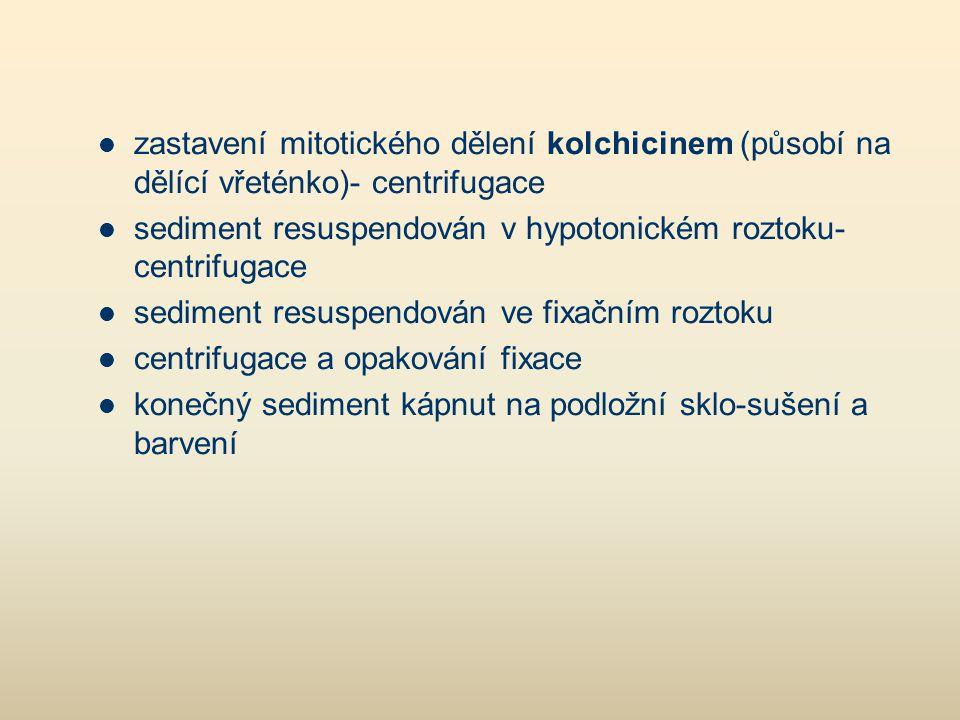 zastavení mitotického dělení kolchicinem (působí na dělící vřeténko)- centrifugace
